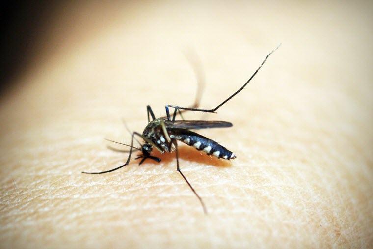 DEET Mückenschutz