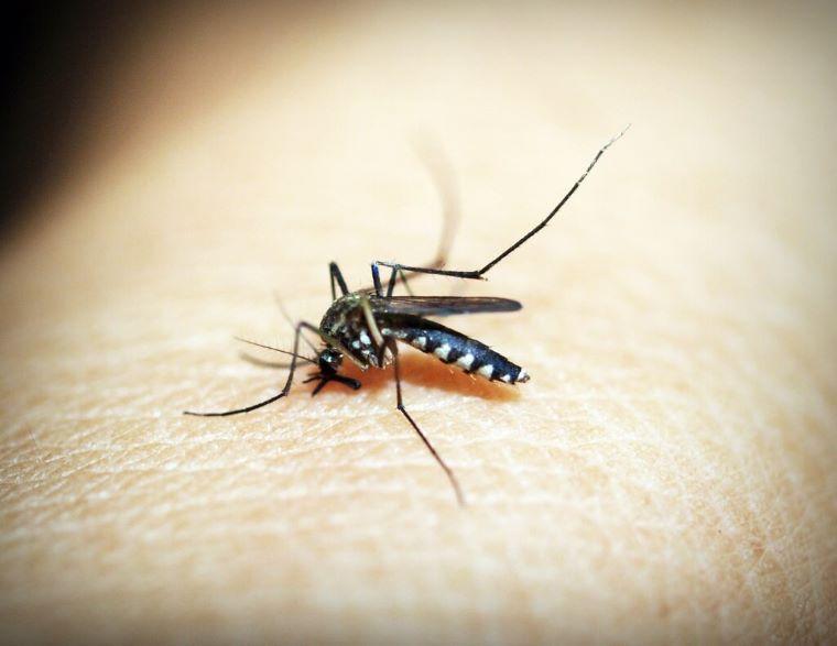 Mückenarten