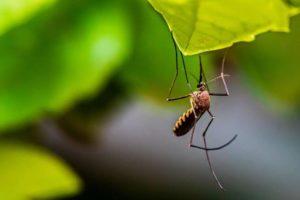 Wann schlafen Mücken?